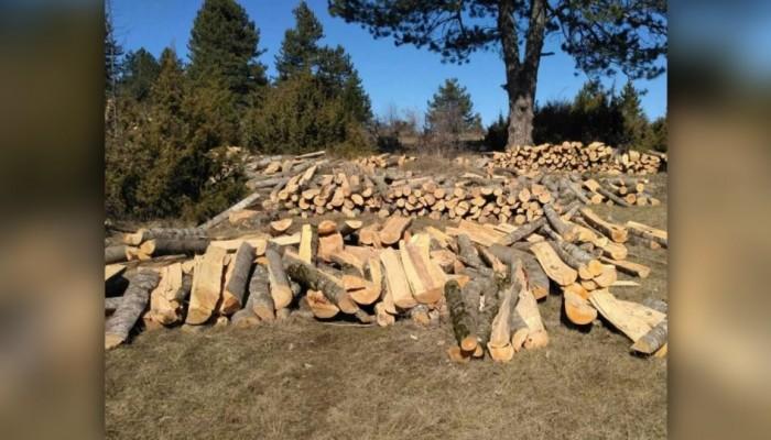 Καστοριά: Αλβανός λαθροϋλοτόμος ρήμαξε δάσος