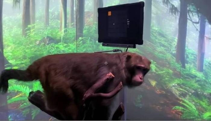 Ο Έλον Μασκ παρουσιάζει μαϊμού να παίζει βιντεοπαιχνίδι… με το νου της