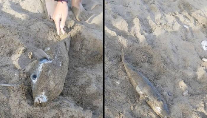 Παράπονα για τους λαγοκέφαλους στην Κρήτη (φωτο)