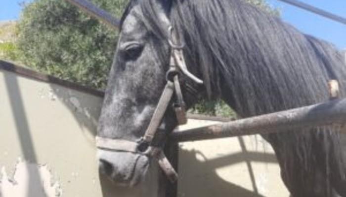 Κρήτη: Συνελήφθη άνδρας που βασάνιζε το άλογο του – Το ζώο βρέθηκε με κομμένο πόδι