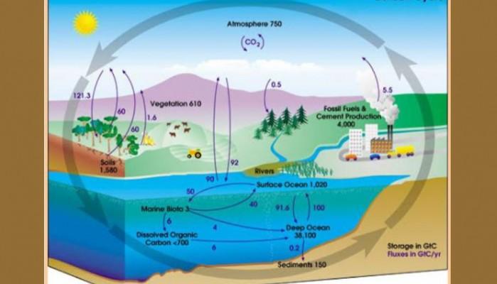 Εμείς και ο κύκλος του άνθρακα
