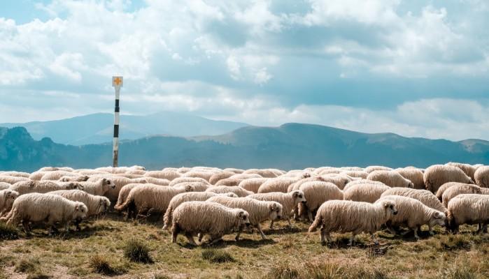 Κινητοποίηση πραγματοποιεί ο κτηνοτροφικός σύλλογος Χανίων στα γραφεία του ΟΠΕΚΕΠΕ
