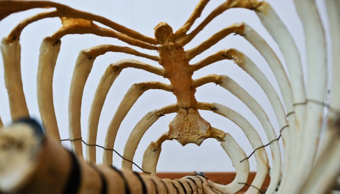 Εντοπίστηκαν ανθρώπινα οστά μέσα σε βαρέλι