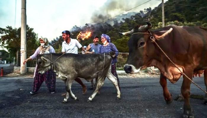 Απόλυτος συναγερμός στην Τουρκία: Η φωτιά πλησιάζει τον ηλεκτρικό σταθμό του Μίλας