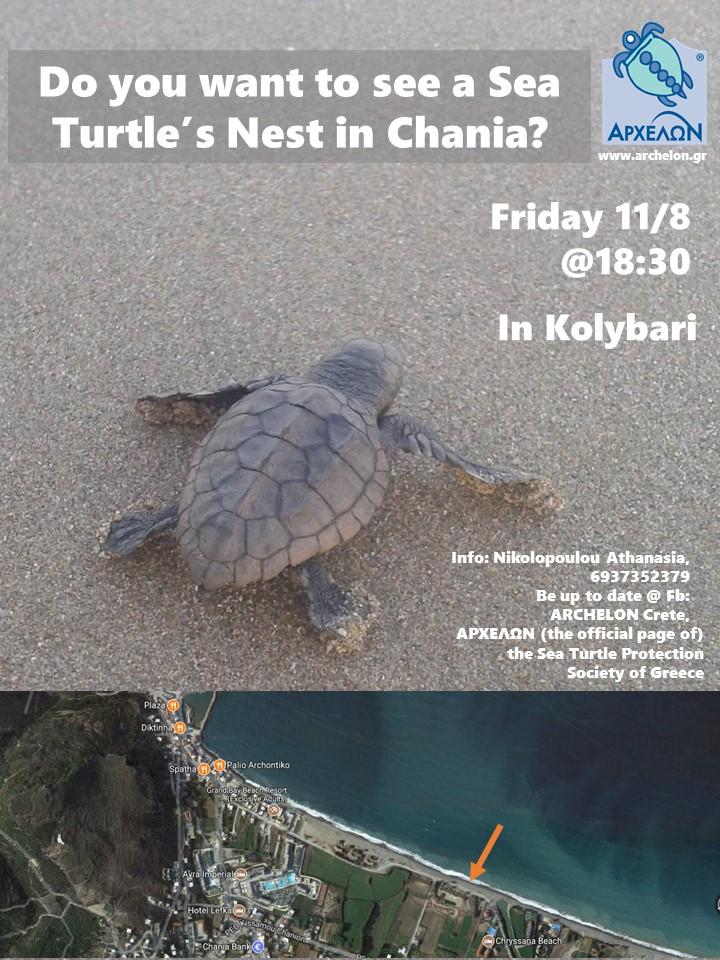 χελώνα dating