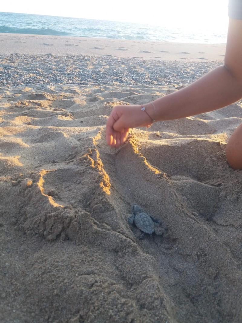 Первые детёныши черепахи Каретта каретта в Ретимно